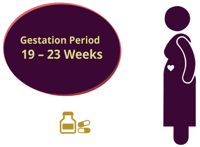 gestation-period